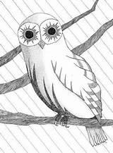 Coloring Owl Printing Pdf sketch template