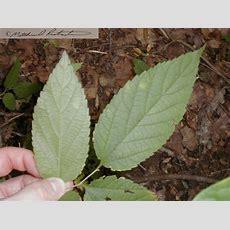 Common Plants Of Kentucky