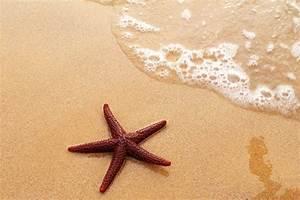 Starfish Wallpapers - Wallpaper Cave