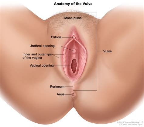 Hiv From One Night Stand by Vulvar Cancer Treatment