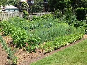 Beautiful vegetable garden meanwhile at the manse for Beautiful vegetable garden pictures