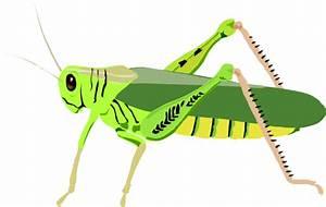 Grasshopper Locust Clip Art at Clker.com - vector clip art ...