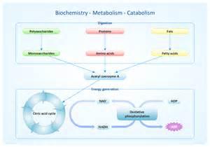 Metabolism Examples Biology
