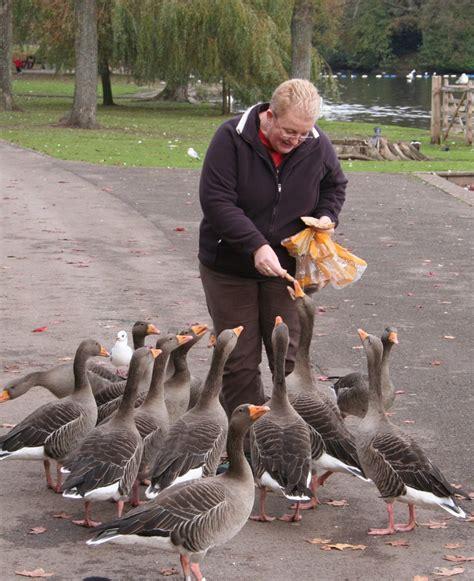 nb bendigedig feeding the birds or littering