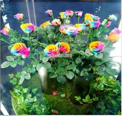 Garden Plants 100 Beautiful Rainbow Rose Seeds Multi