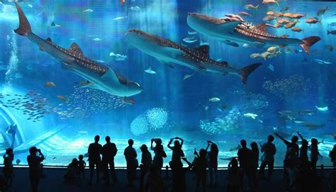 largest aquarium in the world the world s second largest aquarium tank kuroshio black current sea okinawa japan