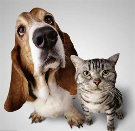 Cat And Dog Dog And Cat