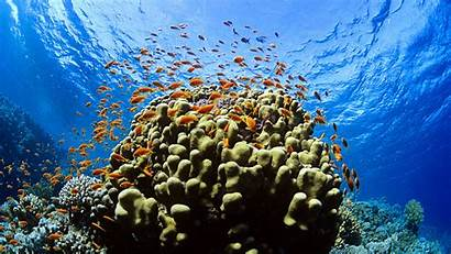 Underwater Coral Reef Pixelstalk Reefs