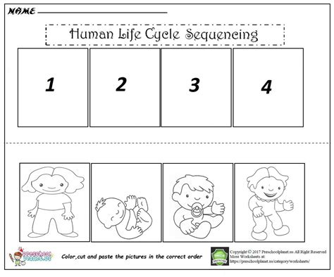 human cycle for worksheet human cycle sequencing worksheet