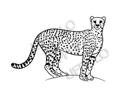 disegni da colorare animali della savana raccolta immagini e disegni di animali africani uffolo