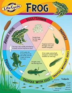 Trend Enterprises Life Cycle Of A Frog Learning Chart