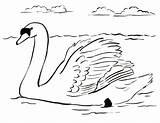 Swan Coloring Drawing Printable Colouring Drawings Swans Dot Sheet Animals Samanthasbell sketch template