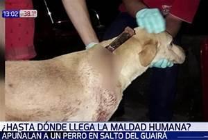 Indaptado Clava Cuchillo Contra Cuello De Perro En Salto Del Guair U00e1