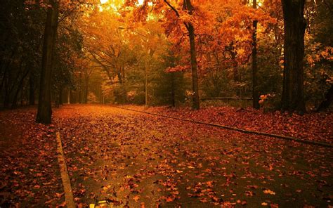 Autumn Themed Wallpapers For Android by Fall Themed Wallpapers Desktop Wallpaper Cave