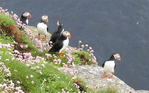 visiting puffin s it s a happy place our joyful