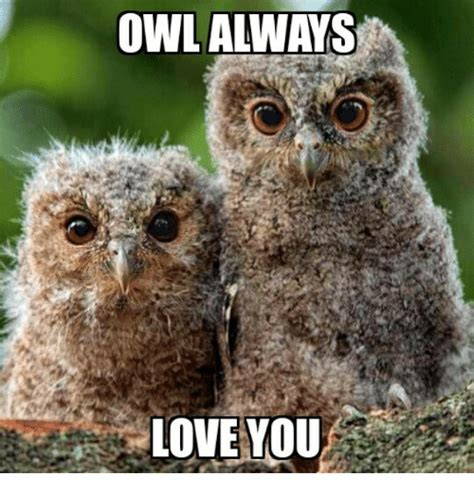 Owl Who Meme - owl always love you love meme on sizzle