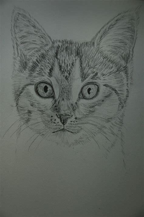 maggi zeichnung katze bleistiftzeichnung zeichnungen