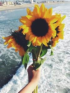 hipster sunflower | Tumblr