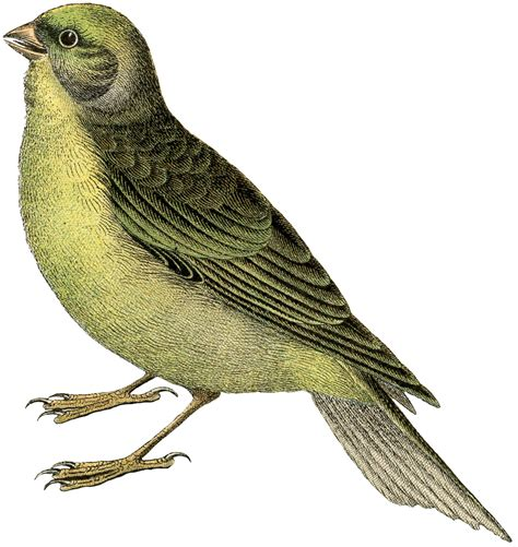 Free Printable Vintage Bird