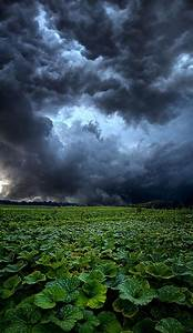 Reclusive by Phil Koch