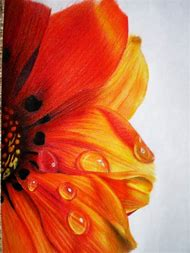 Realistic Colored Pencil Drawings Flowers