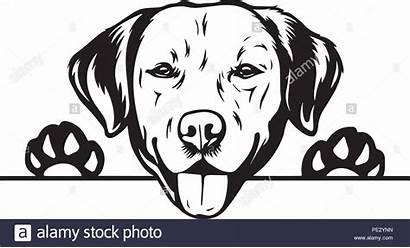 Labrador Head Retriever Clipart Face Cartoon Silhouette