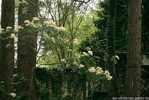 Eberesche Im Garten : der versteckte garten ~ Yasmunasinghe.com Haus und Dekorationen