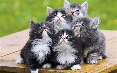 Funny Animals Wallpapers Animal Cats Wildlife Pets