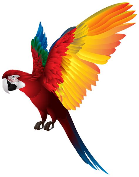 Parrot Clip Real Parrot Clipart Clipground