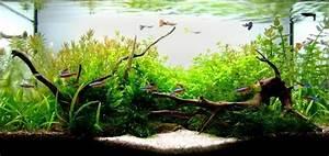 Aquarium Einrichten 60l : aquarium einrichtung sorgt f r das wohlf hlen der ~ Michelbontemps.com Haus und Dekorationen