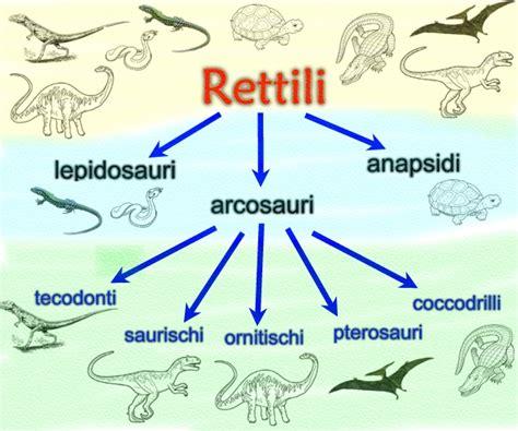Giochi Di Dinosauri Volanti Mappe Scienze Evoluzionismo E Tassonomia Libro Di Scuola