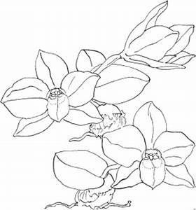 Schöne Orchideen Bilder : schoene orchideen ausmalbild malvorlage blumen ~ Orissabook.com Haus und Dekorationen