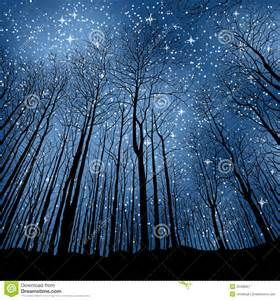Forest at Night with Stars