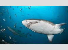 Shark social networking UDaily