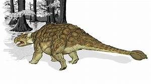 Ankylosaurus Dinosaur Pictures U0026 Images Science For Kids