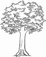 Tree Coloring Simple Pencil Drawing Olive Sketches Drawings Pages Line Roots Clipart Branches Sketch Cliparts Trees Getdrawings Printable Getcolorings Favorites sketch template