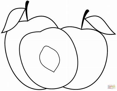 Peach Coloring Pages Printable Paper Drawing