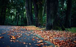 World roads street path trail nature landscapes trees ...