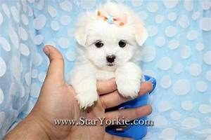 newborn puppy maltese rescue adoption Quotes