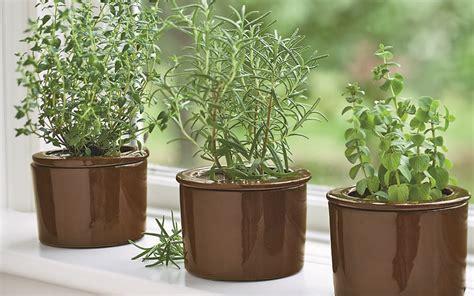 herbs patio backyard flower vertical herb garden indoor