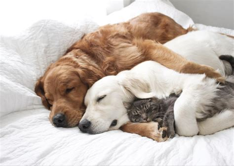 Sleep And Pets by Could Your Pet Be Affected By Pyometra Oakhill Vets