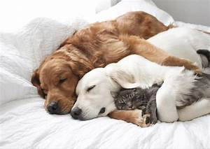 Cuddly Cat and Dog Best Friends to Soothe Your Soul ...
