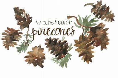 Pinecone Watercolor Clip Clipart Pinecones Pine Autumn