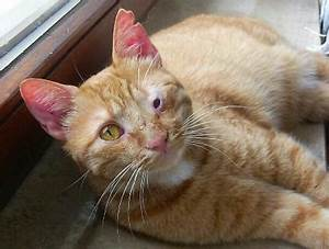 Wie Fange Ich Eine Katze : wie sie wissen dass eine katze w rmer ~ Markanthonyermac.com Haus und Dekorationen