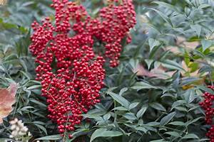 Uncovering the Unique and Different Types of Holly Bushes