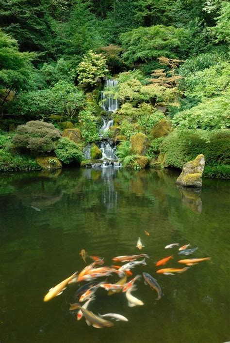 koi ponds japanese gardens and koi on