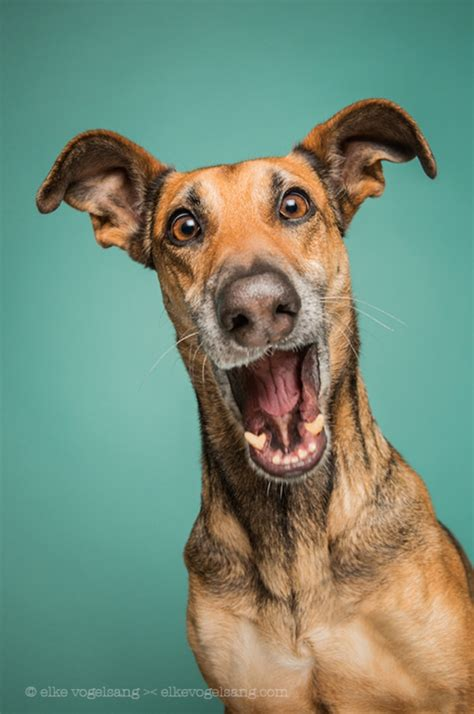 expressive portraits  dogs presenting  playful