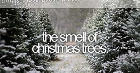 christmas tree has musty smell things i about winter that tree smell