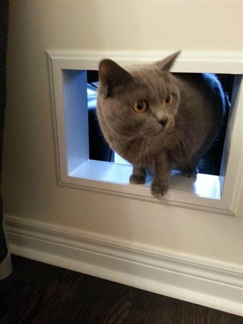 DIY Cat Tunnels / Doors / Pass Through / Bypass between rooms - DIYable.com