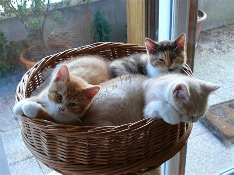 combien de portee par an pour un chat zooth 233 rapie avec un chat m 233 diateur chat visiteur